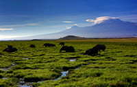 Marshes of Amboseli National Park,  Kilimanajaro