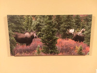 $130 down from $180 16x32   Monster bull moose and cow. Canvas