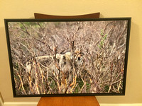 $200 framed wolf canvas  photo was on the National geographic website.