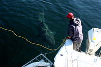 Nothing captures so much excitement and fear, as watching a great white shark approach your boat.