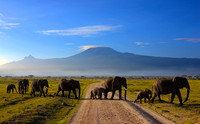 Land of giants. Mt.Kilimanjaro in the early morning, Amboseli National Park