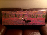 $150   16x48 bull moose with fall colors.