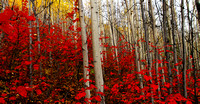Alaskan Fall Colors  Canvas 16x32